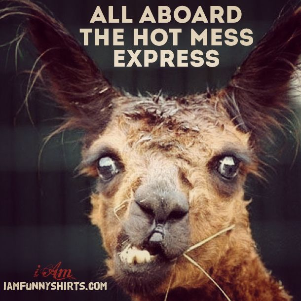 76c318a276fe7a6a89fd208b75881fb1--alpacas-funny-things